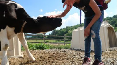 A girl petting a cow